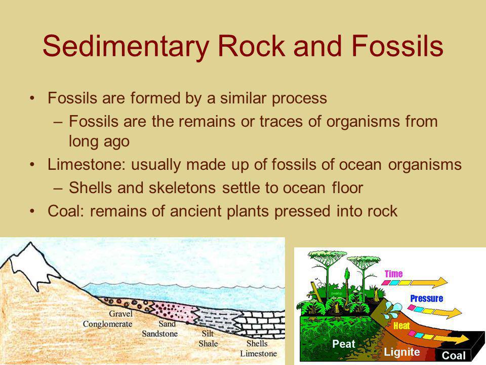 Sedimentary Rock and Fossils
