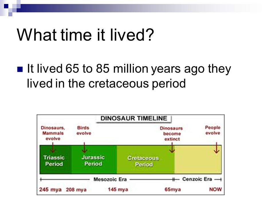 What time it lived It lived 65 to 85 million years ago they lived in the cretaceous period