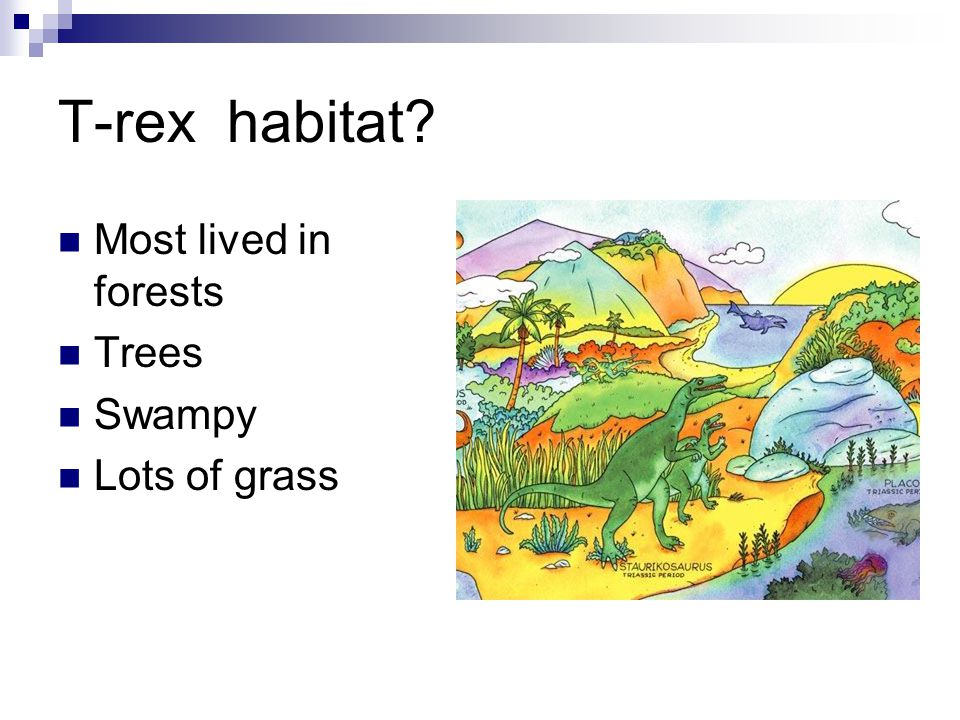T-rex habitat Most lived in forests Trees Swampy Lots of grass