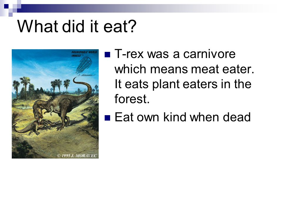 What did it eat. T-rex was a carnivore which means meat eater.