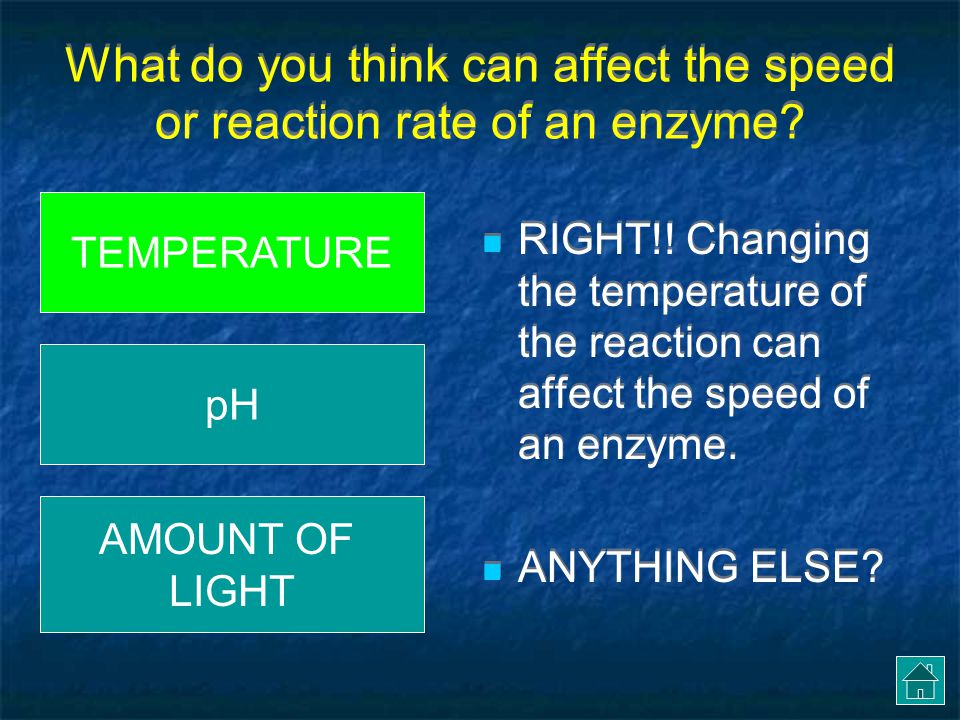 What do you think can affect the speed or reaction rate of an enzyme