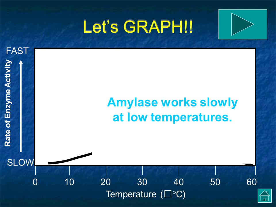 Let's GRAPH!! Amylase works slowly at low temperatures. FAST SLOW 10
