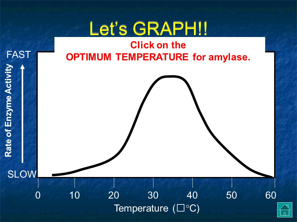 OPTIMUM TEMPERATURE for amylase.