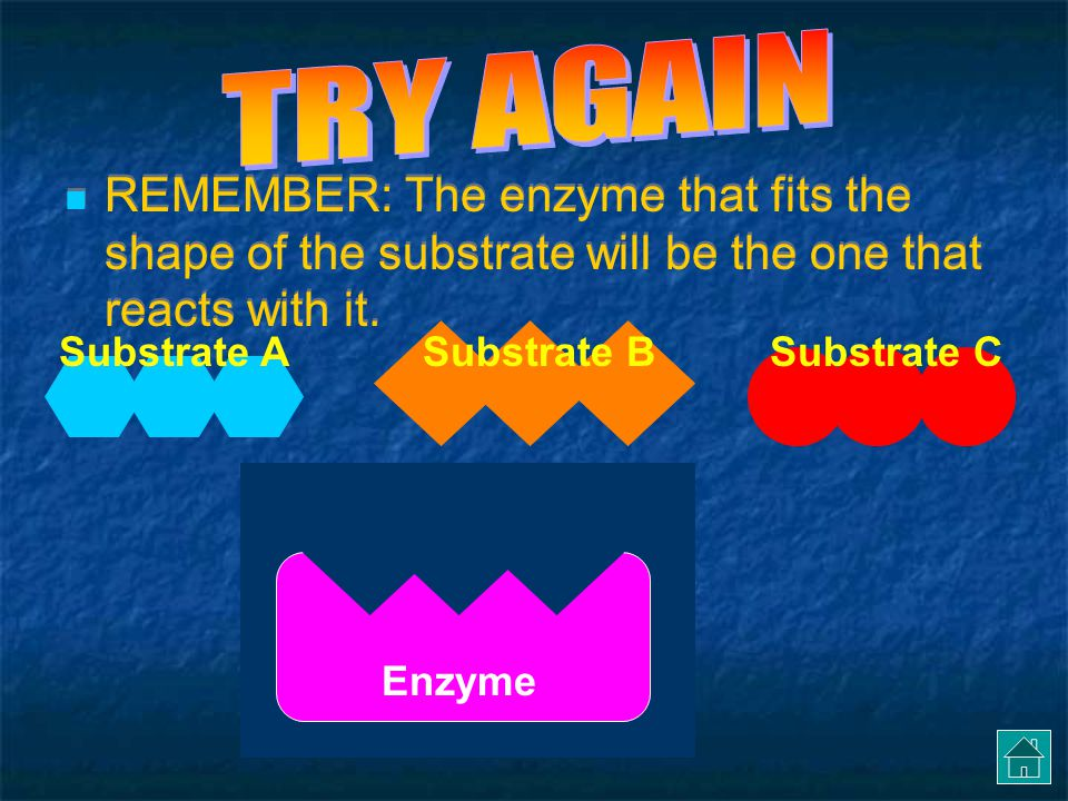 TRY AGAIN REMEMBER: The enzyme that fits the shape of the substrate will be the one that reacts with it.