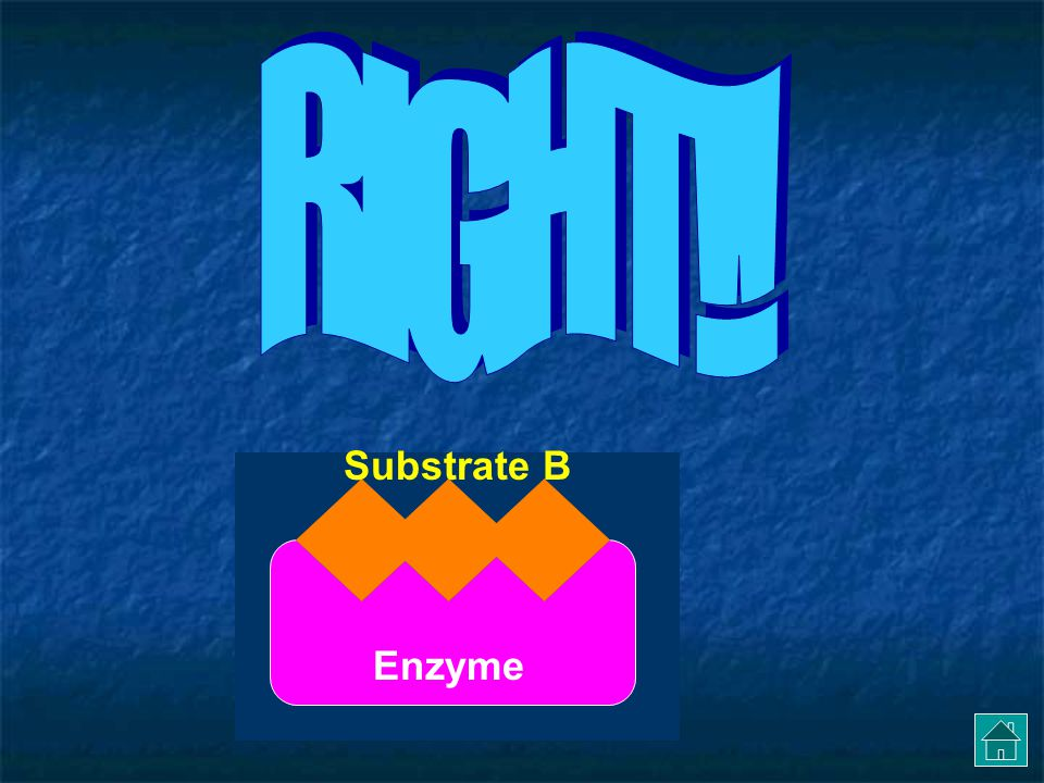 RIGHT!! Substrate B Enzyme
