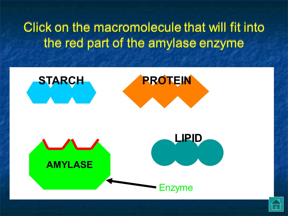 Click on the macromolecule that will fit into the red part of the amylase enzyme
