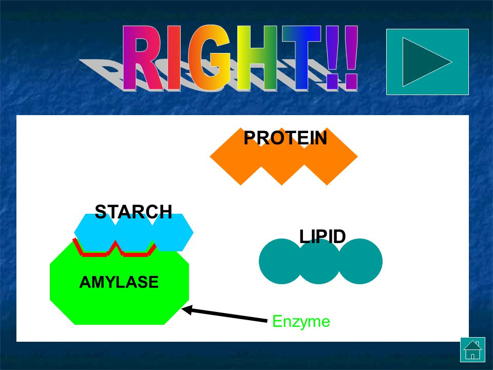 RIGHT!! PROTEIN STARCH LIPID AMYLASE Enzyme