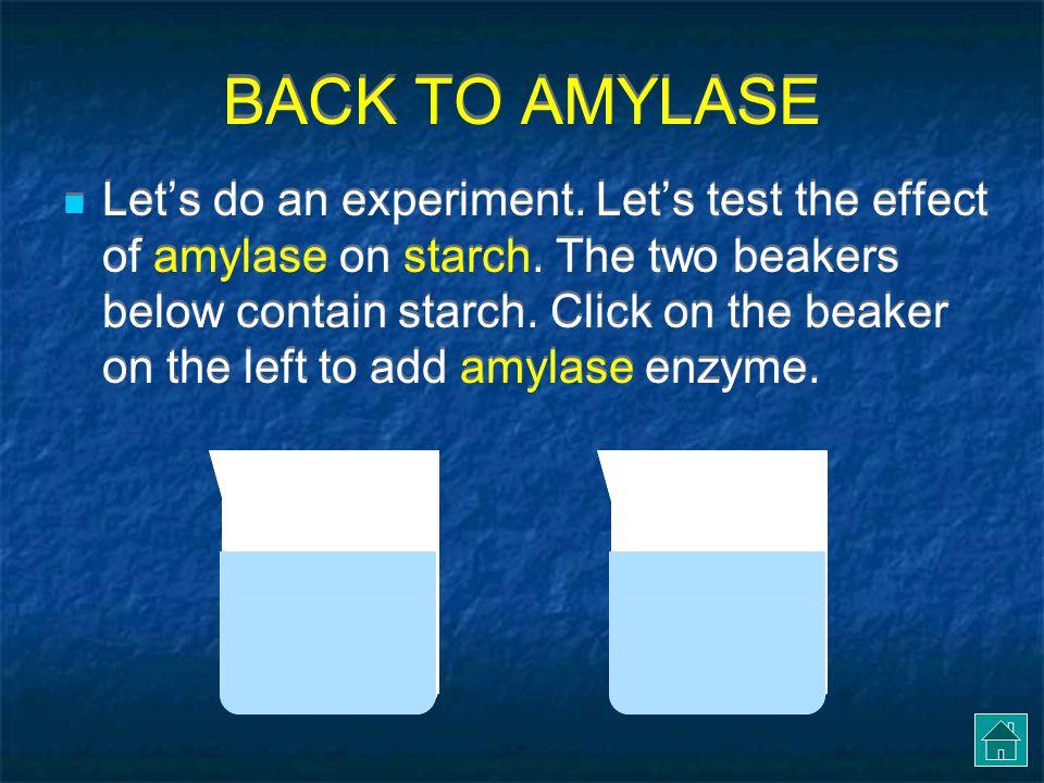 BACK TO AMYLASE