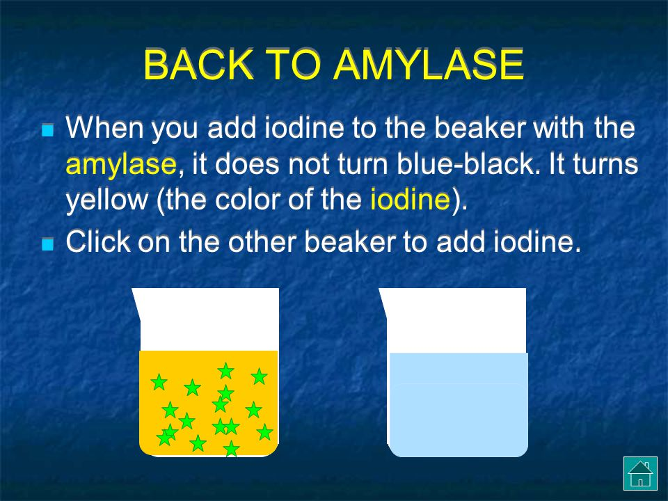 BACK TO AMYLASE When you add iodine to the beaker with the amylase, it does not turn blue-black. It turns yellow (the color of the iodine).