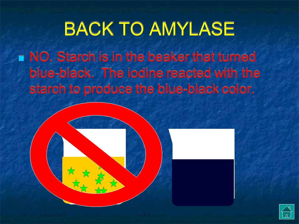 BACK TO AMYLASE NO. Starch is in the beaker that turned blue-black.