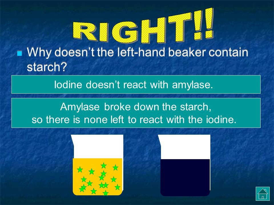 RIGHT!! Why doesn't the left-hand beaker contain starch