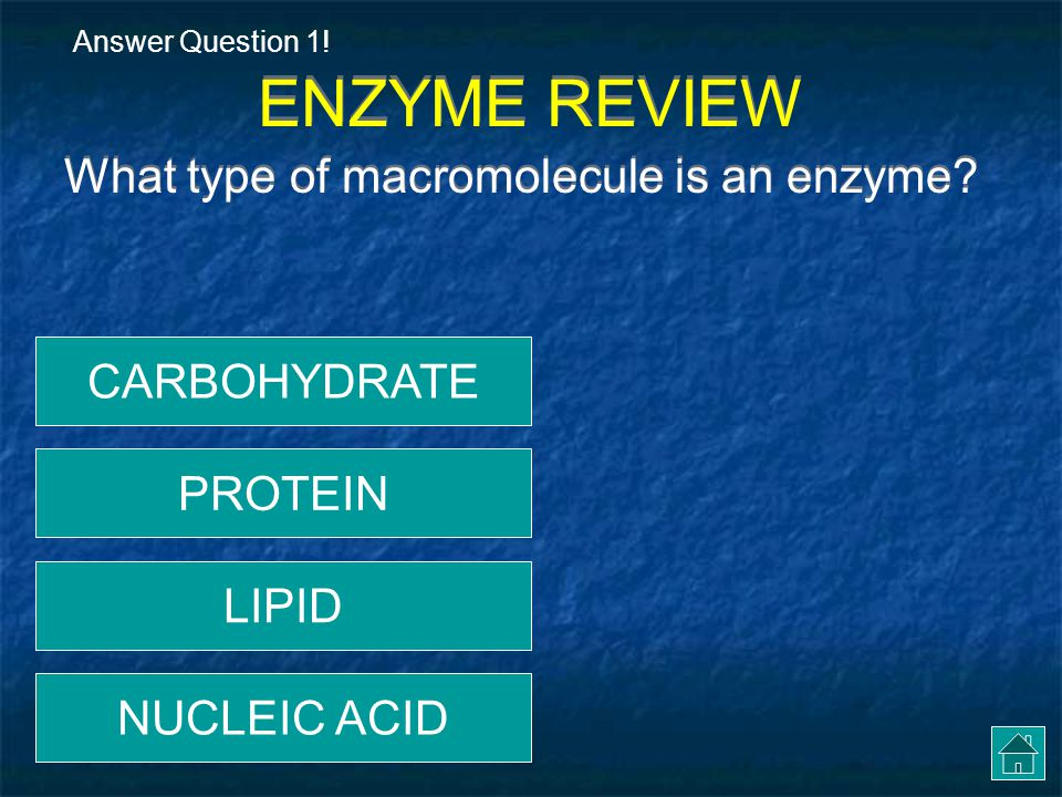 ENZYME REVIEW What type of macromolecule is an enzyme CARBOHYDRATE