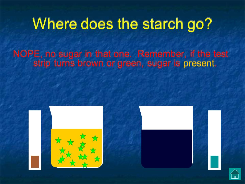 Where does the starch go