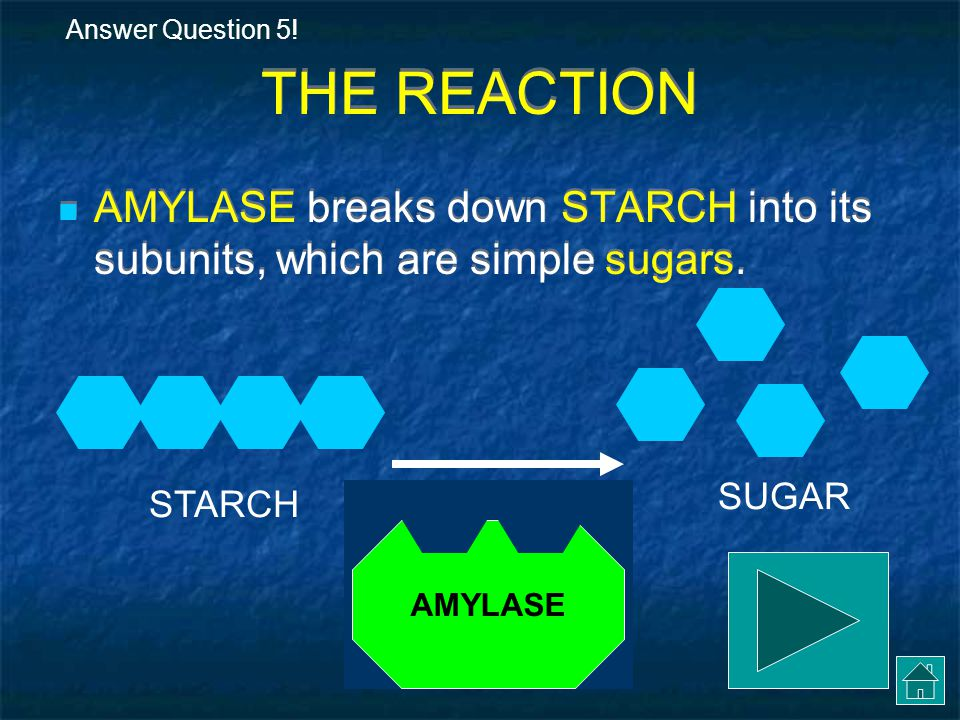 Answer Question 5! THE REACTION. AMYLASE breaks down STARCH into its subunits, which are simple sugars.