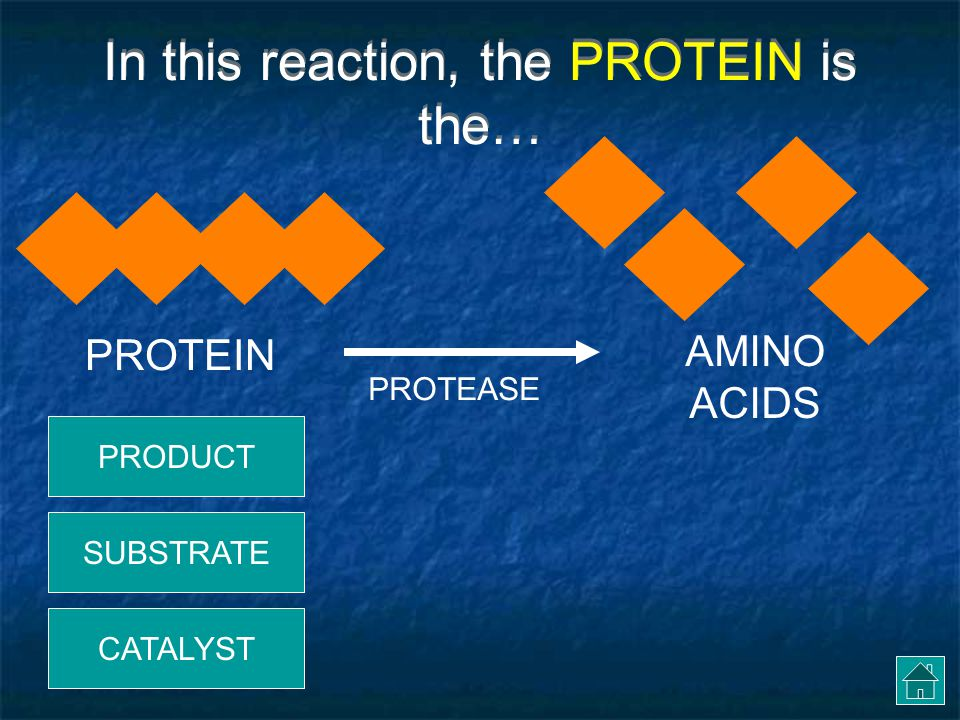 In this reaction, the PROTEIN is the…