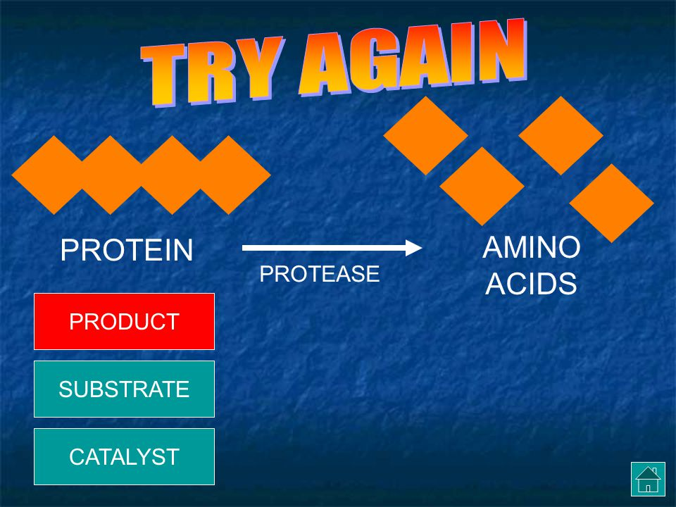 TRY AGAIN PROTEIN AMINO ACIDS PROTEASE PRODUCT SUBSTRATE CATALYST