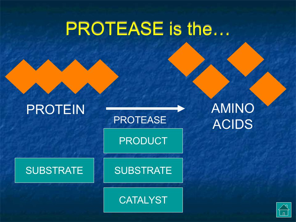 PROTEASE is the… AMINO ACIDS PROTEIN PROTEASE PRODUCT SUBSTRATE