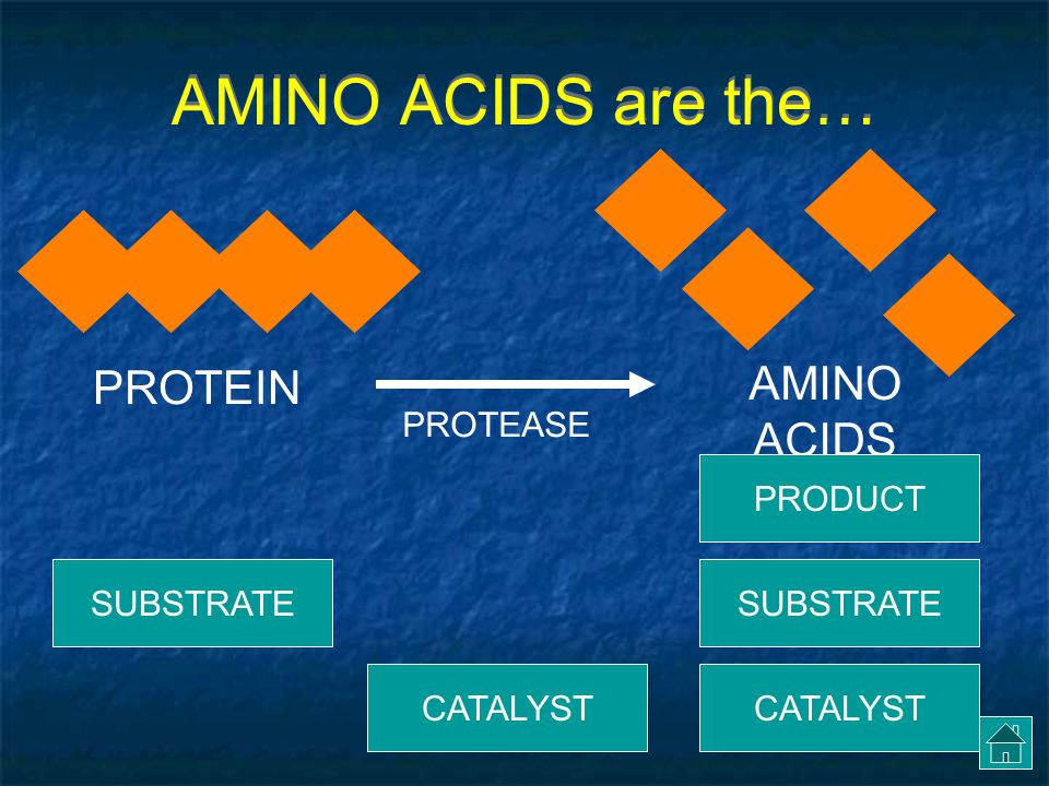 AMINO ACIDS are the… AMINO ACIDS PROTEIN PROTEASE PRODUCT SUBSTRATE