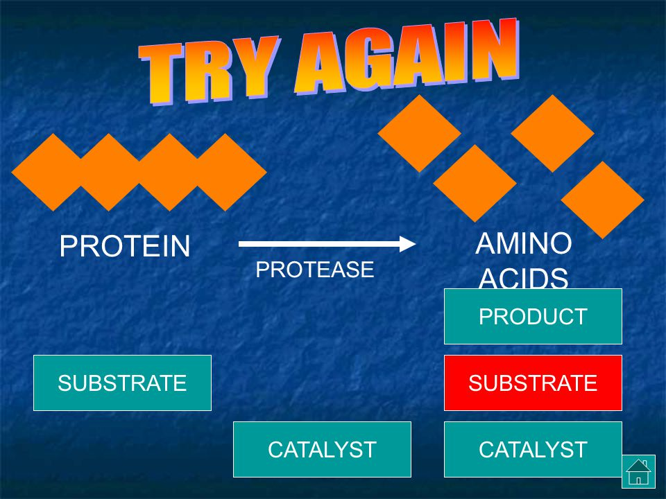 TRY AGAIN AMINO ACIDS PROTEIN PROTEASE PRODUCT SUBSTRATE SUBSTRATE