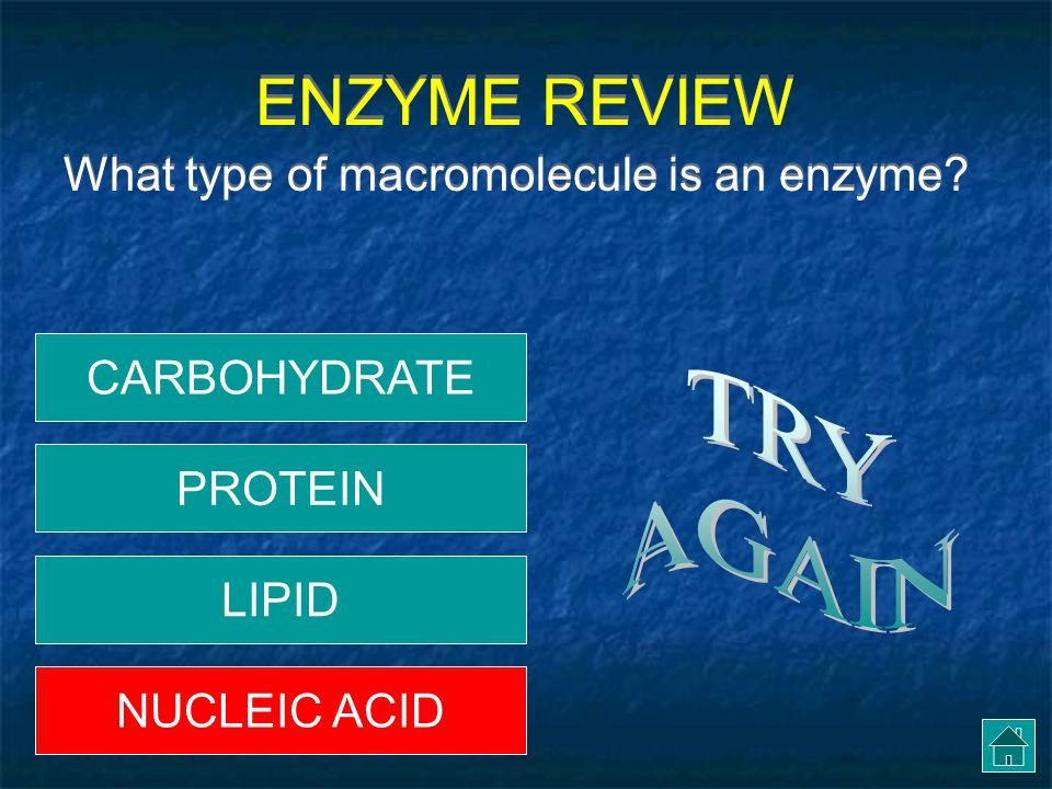 ENZYME REVIEW TRY AGAIN What type of macromolecule is an enzyme