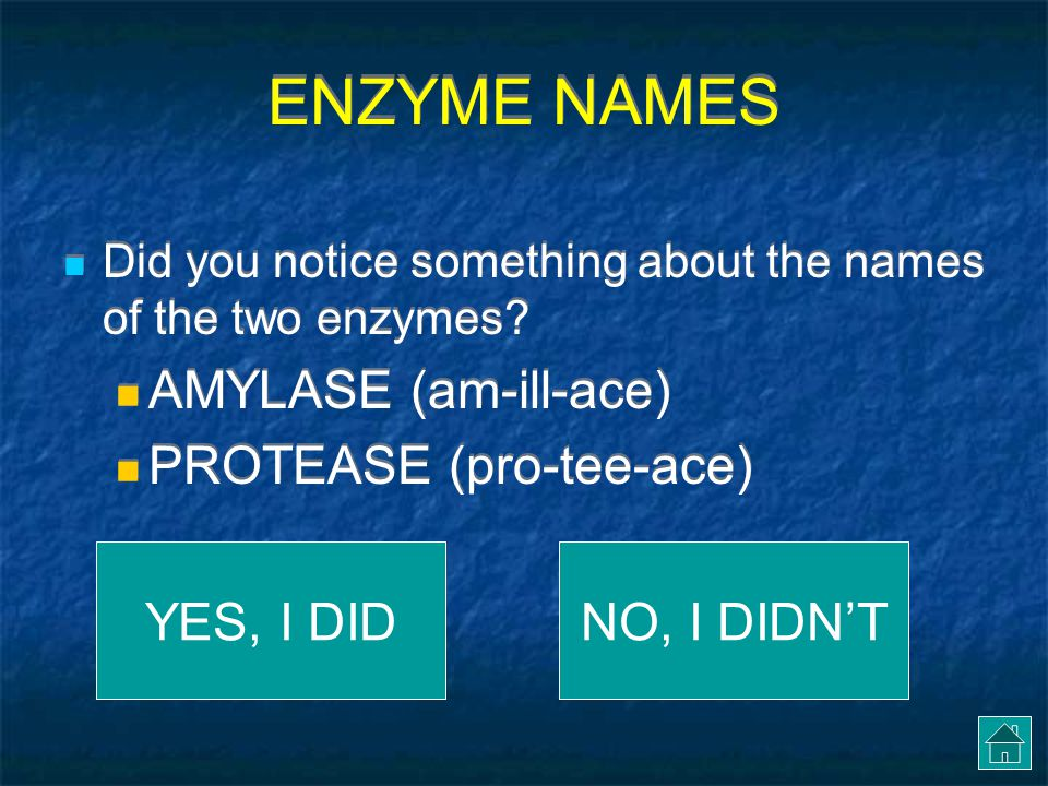 ENZYME NAMES AMYLASE (am-ill-ace) PROTEASE (pro-tee-ace) YES, I DID