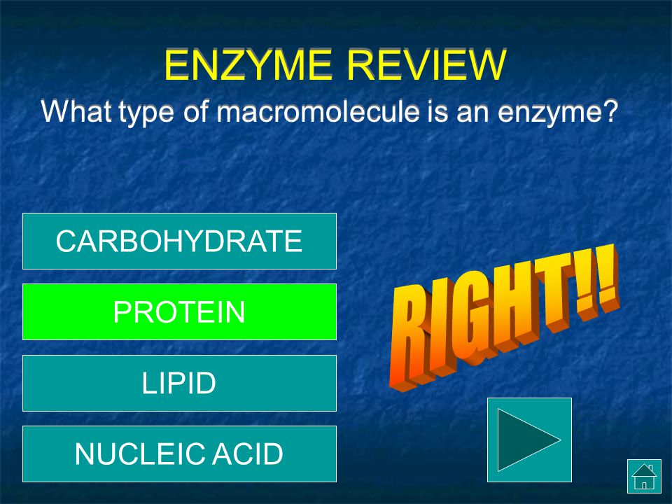 ENZYME REVIEW RIGHT!! What type of macromolecule is an enzyme