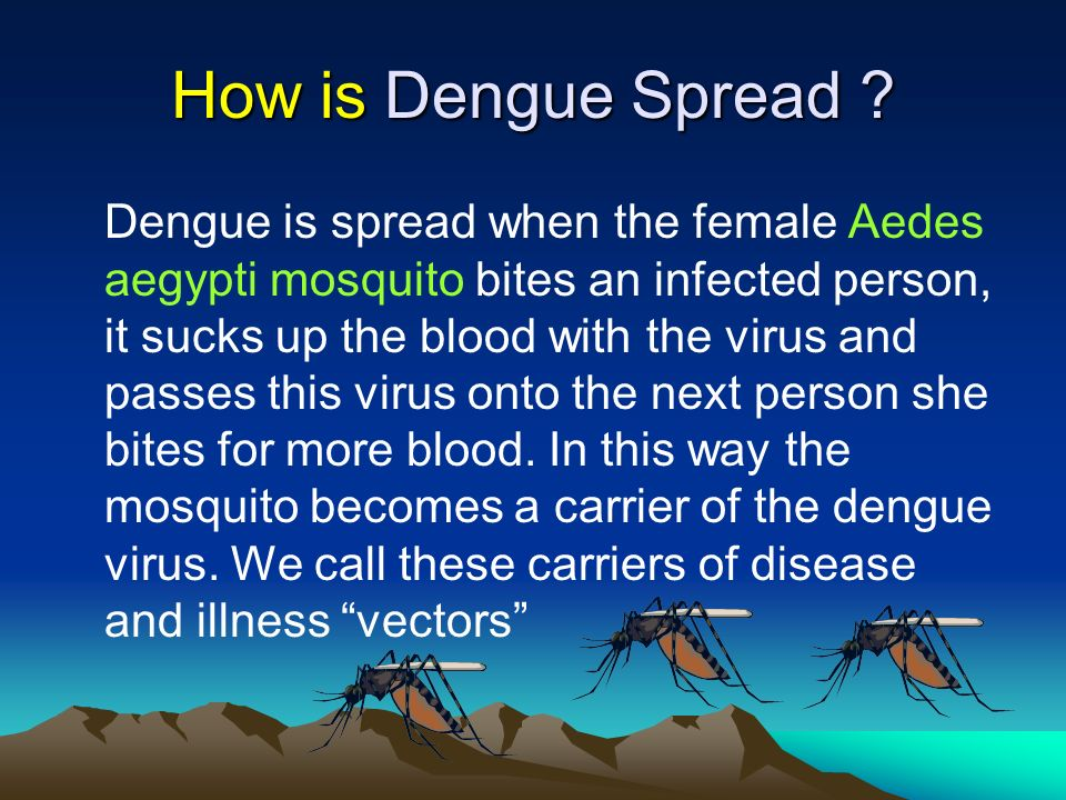 How is Dengue Spread