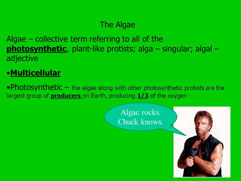 The Algae Algae – collective term referring to all of the photosynthetic, plant-like protists; alga – singular; algal – adjective.