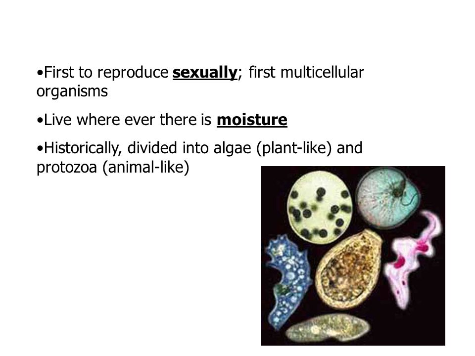 First to reproduce sexually; first multicellular organisms