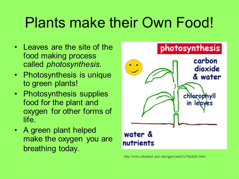 Plants make their Own Food!