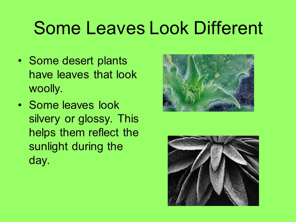 Some Leaves Look Different