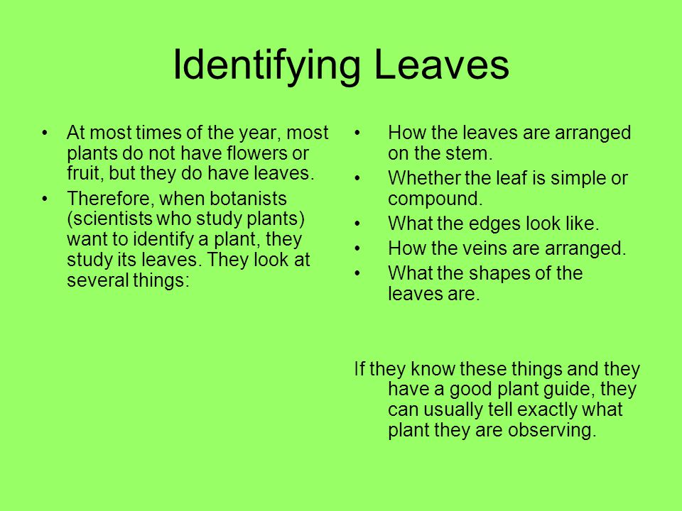Identifying Leaves At most times of the year, most plants do not have flowers or fruit, but they do have leaves.
