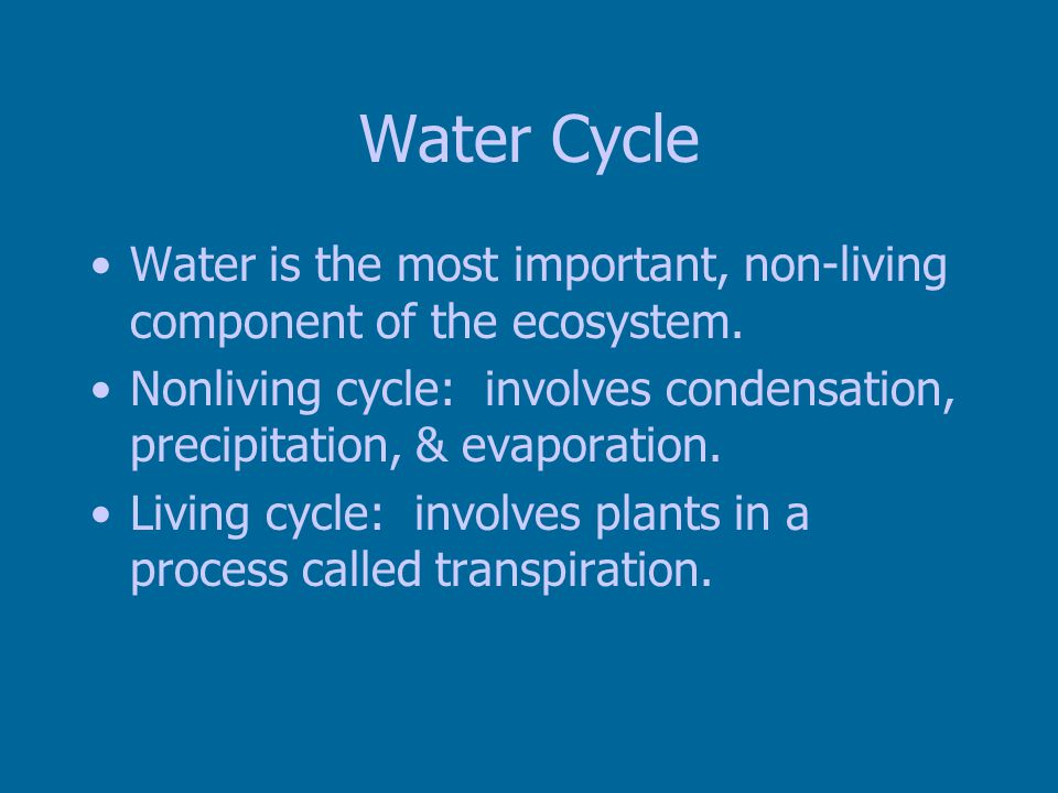 Water Cycle Water is the most important, non-living component of the ecosystem.