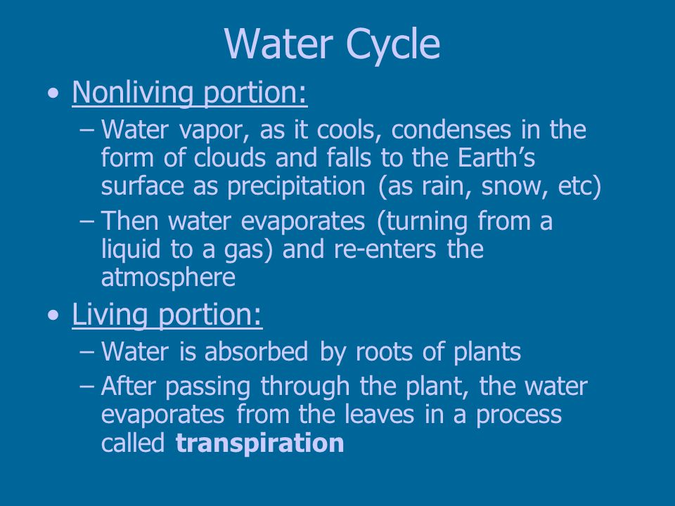 Water Cycle Nonliving portion: Living portion: