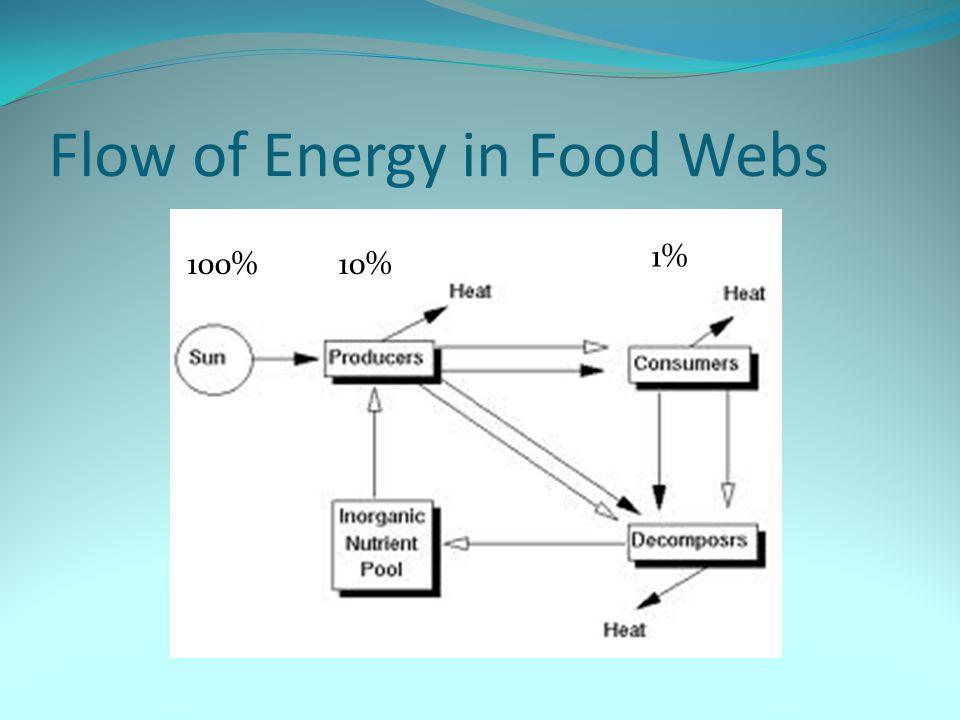Flow of Energy in Food Webs
