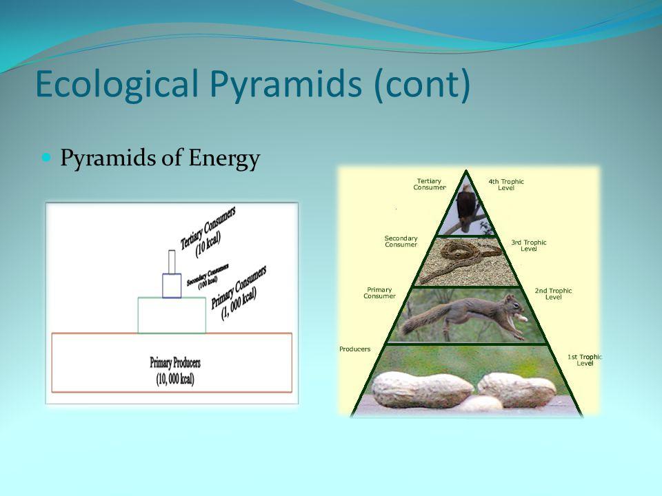 Ecological Pyramids (cont)