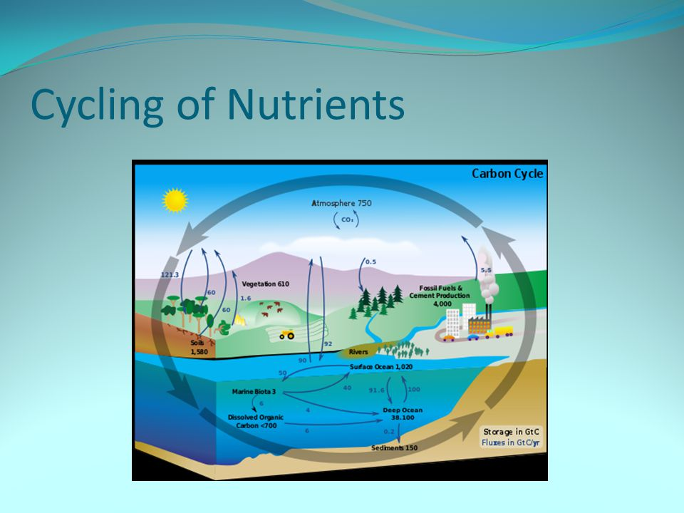 Cycling of Nutrients
