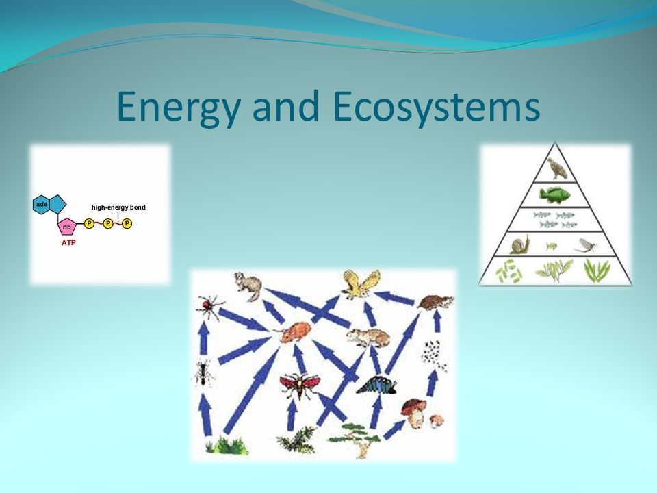 Energy and Ecosystems