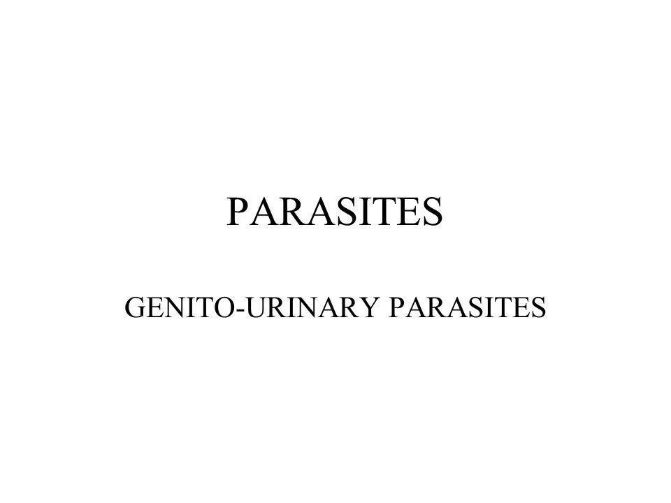 GENITO-URINARY PARASITES