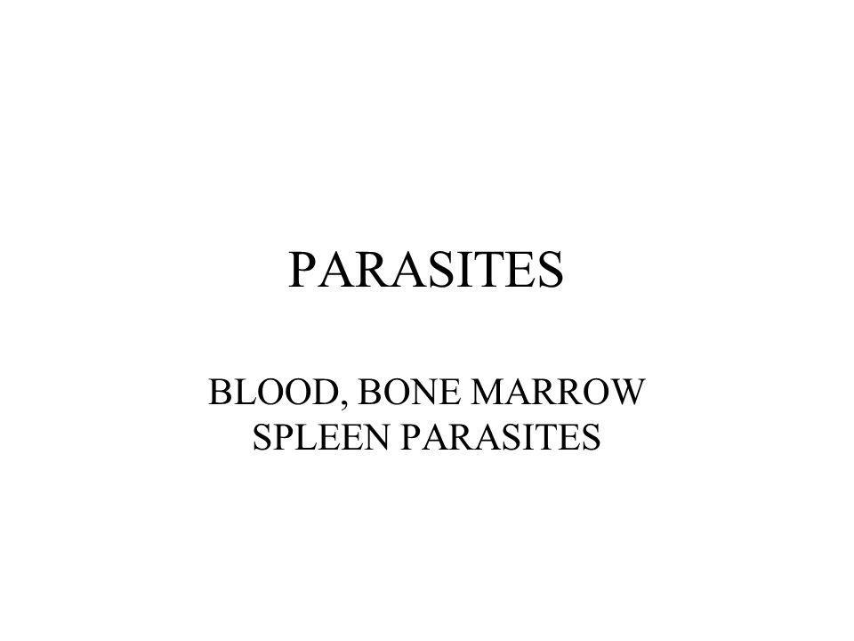 BLOOD, BONE MARROW SPLEEN PARASITES
