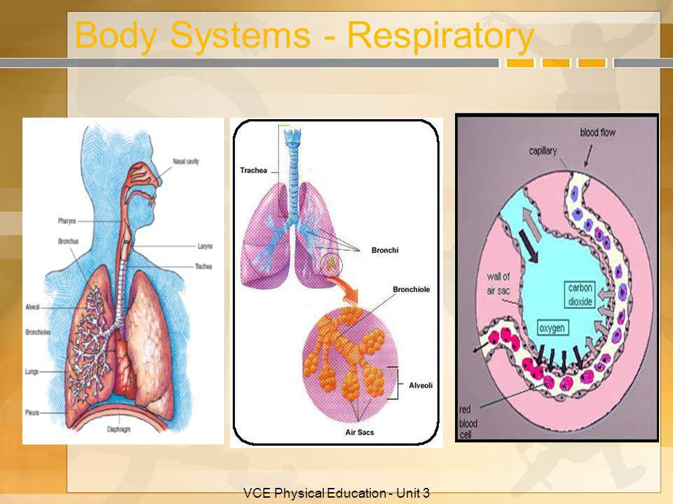 Body Systems - Respiratory