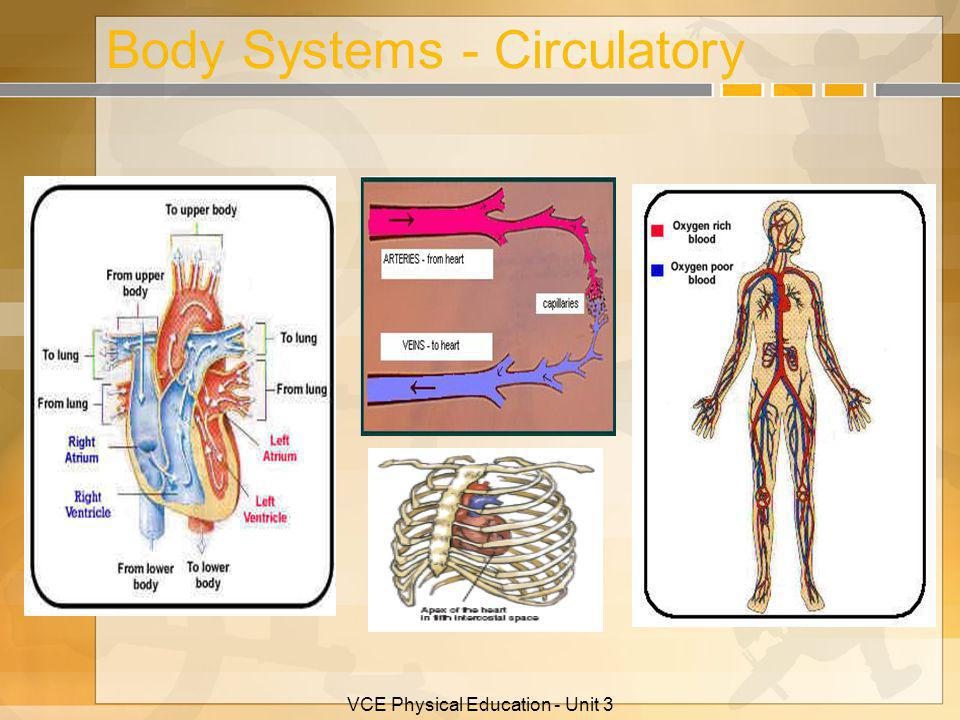 Body Systems - Circulatory