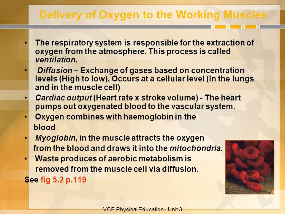 Delivery of Oxygen to the Working Muscles