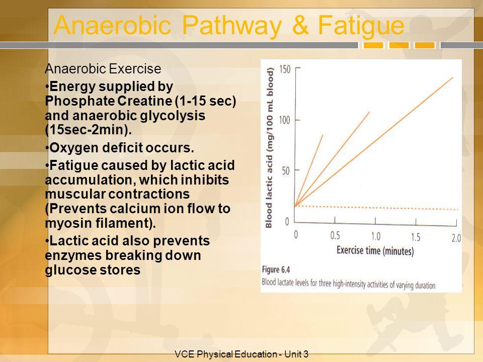 Anaerobic Pathway & Fatigue