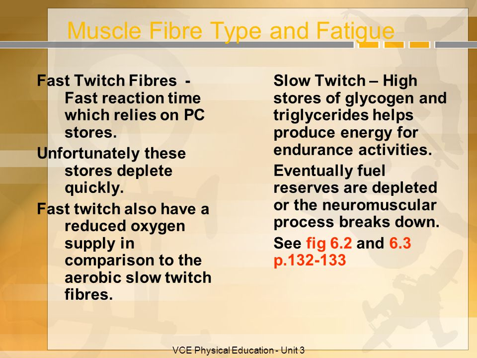 Muscle Fibre Type and Fatigue