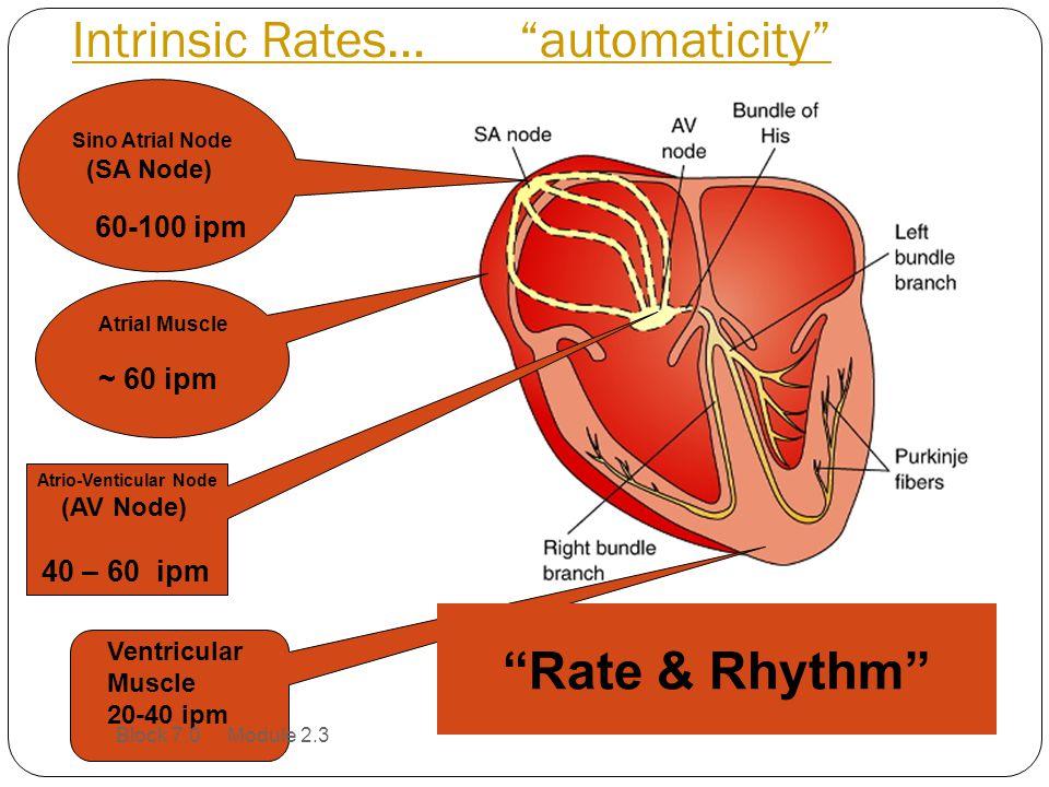 Intrinsic Rates… automaticity