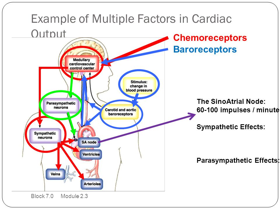 Example of Multiple Factors in Cardiac Output
