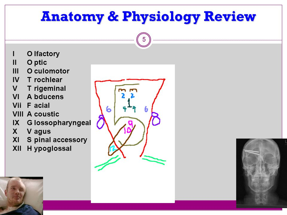 Anatomy & Physiology Review