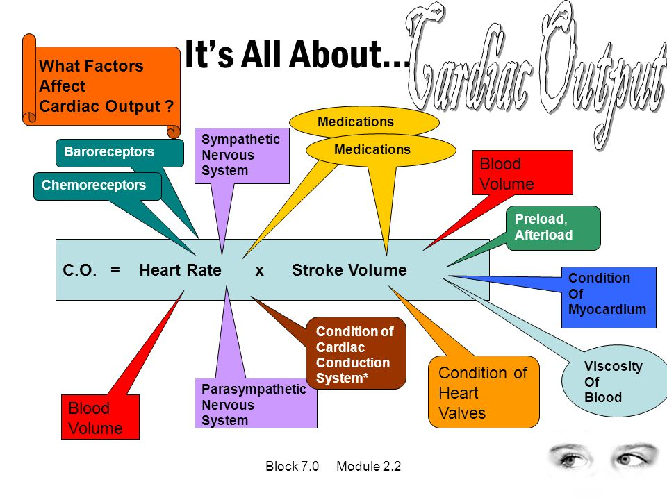 Cardiac Output It's All About… What Factors Affect Cardiac Output