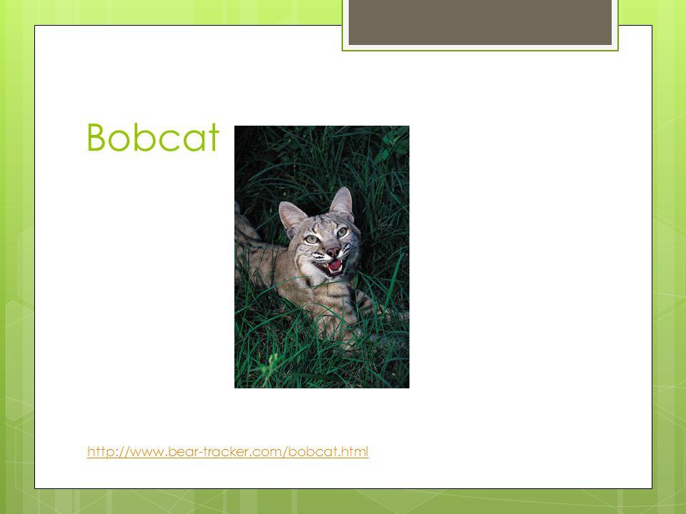Bobcat http://www.bear-tracker.com/bobcat.html